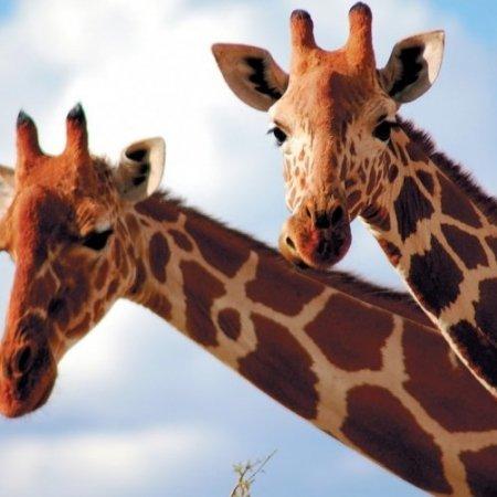 Pearl Afric 12 Days round Trip Uganda