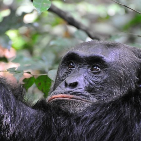 Pearl Afric 8 DAYS GORILLA AND PRIMATES – UGANDA